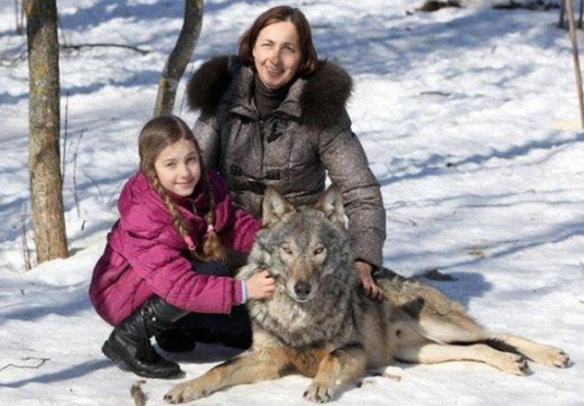 Conheça a família que tem lobos como animais de estimação