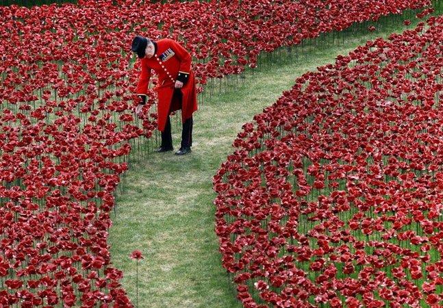 Artista cria instalação com mais de 800 mil flores representando soldados mortos na Primeira Guerra Mundial