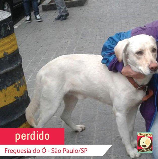 procurase-cachorro2