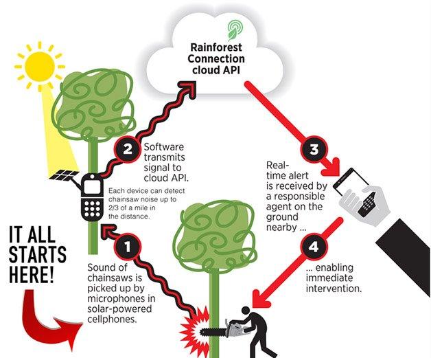 rainforest-connection-funcionamento
