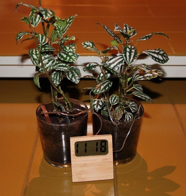 soil-clock-2