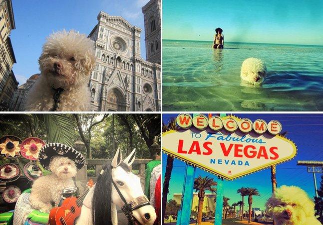 Aos 14 anos de idade, cachorro viaja o mundo com os donos
