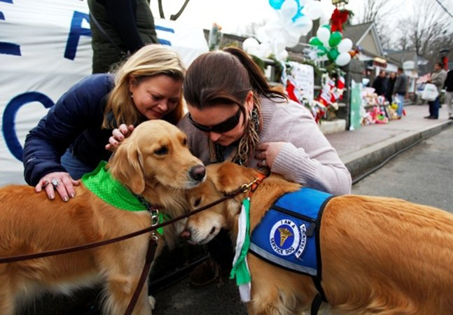 Terapia com cães leva conforto para pessoas em processo de luto