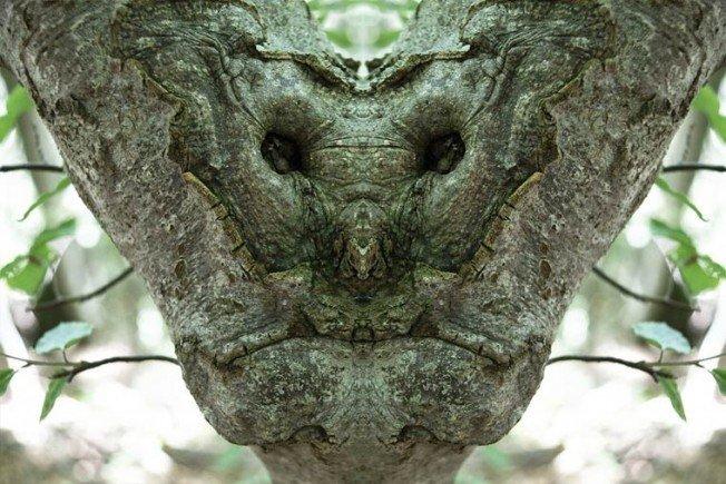 Dream-Creatures-Elido-Turco-15-652x435