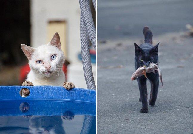 Fotógrafo retrata gatos de rua em cenas cotidianas no Japão