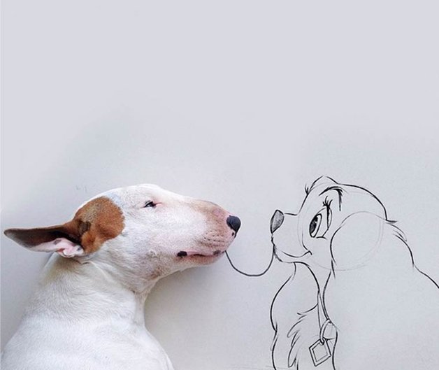 bull-terrier-ilustracoes13