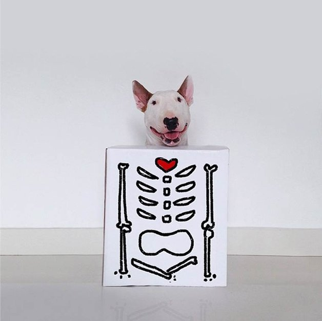 bull-terrier-ilustracoes21