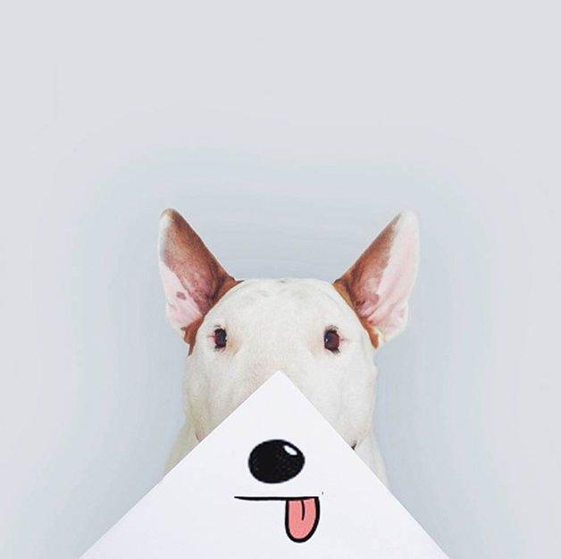 bull-terrier-ilustracoes5