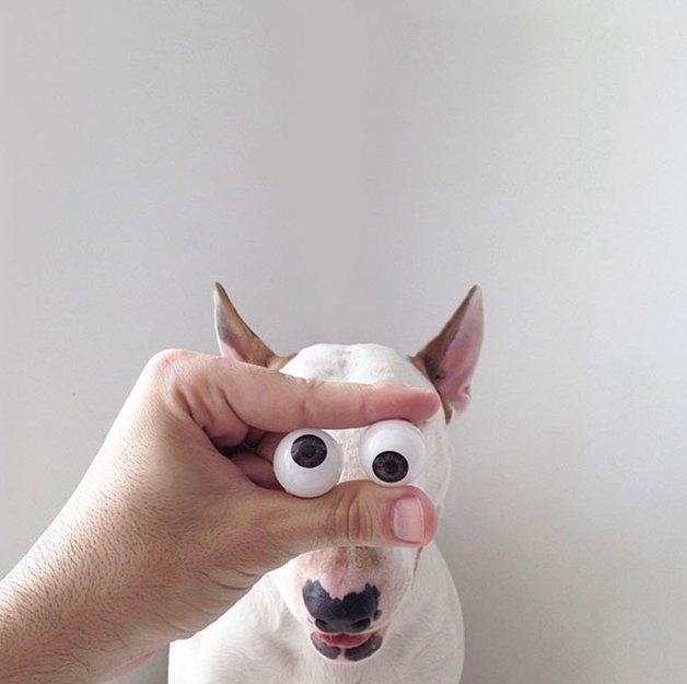 bull-terrier-ilustracoes7