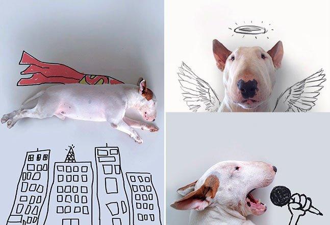 Ilustrador brasileiro usa criatividade para interagir com seu bull terrier e faz sucesso no Instagram