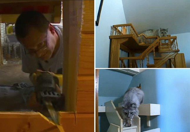 Há 15 anos, autista transforma sua casa num playground perfeito para seus gatos