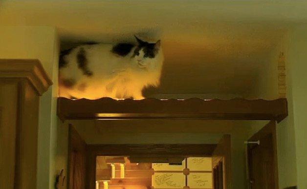 cathouse13