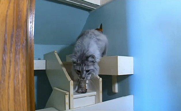 cathouse14
