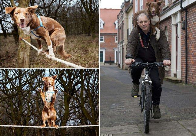 A impressionante habilidade do cão que é mestre em equilíbrio