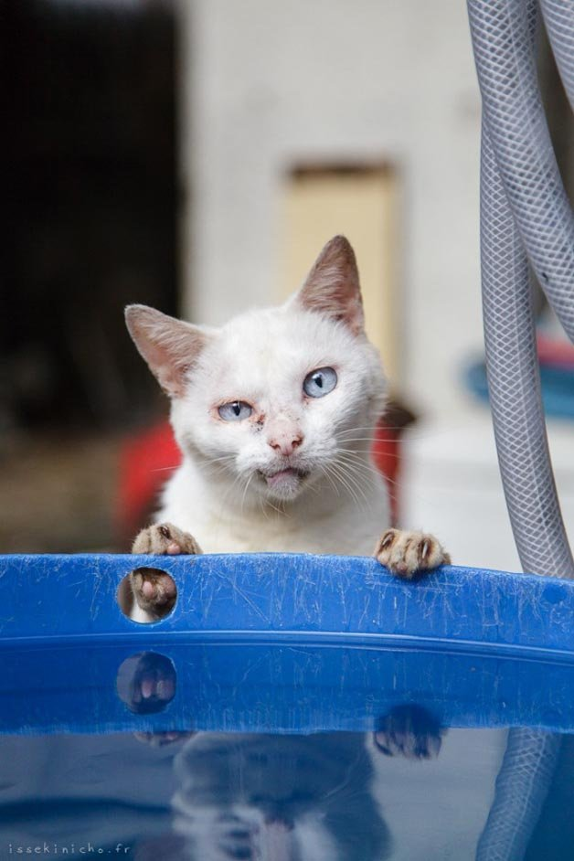 gatos-japao1