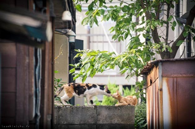 gatos-japao10
