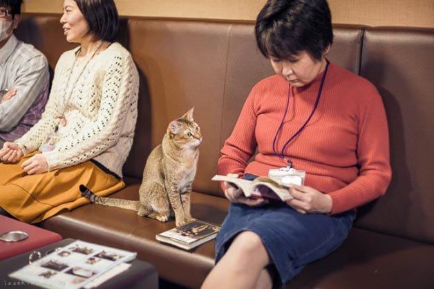 gatos-japao14
