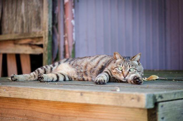 gatos-japao15