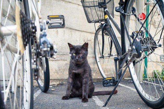 gatos-japao17