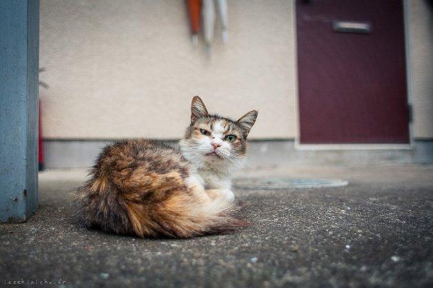 gatos-japao18