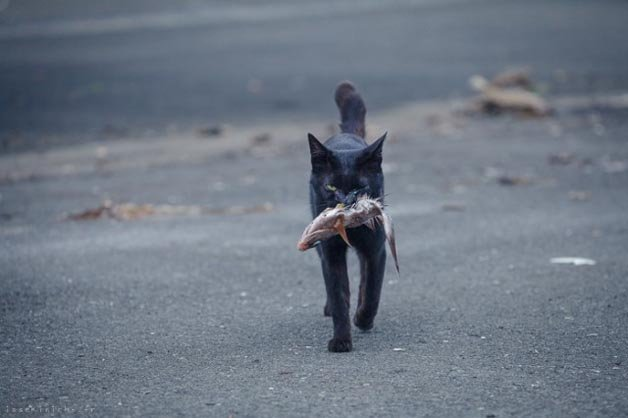 gatos-japao4
