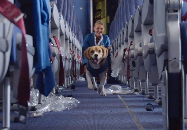 Empresa aérea treina Beagle para devolver itens perdidos aos passageiros