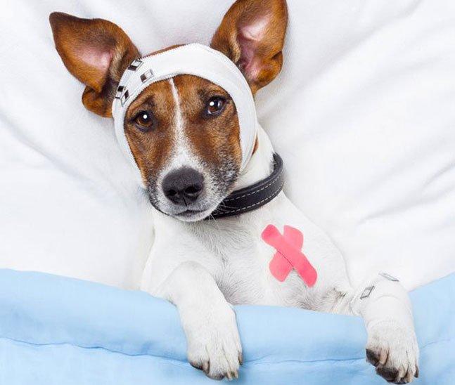 Mercado de plano de saúde para pets ganha força no Brasil