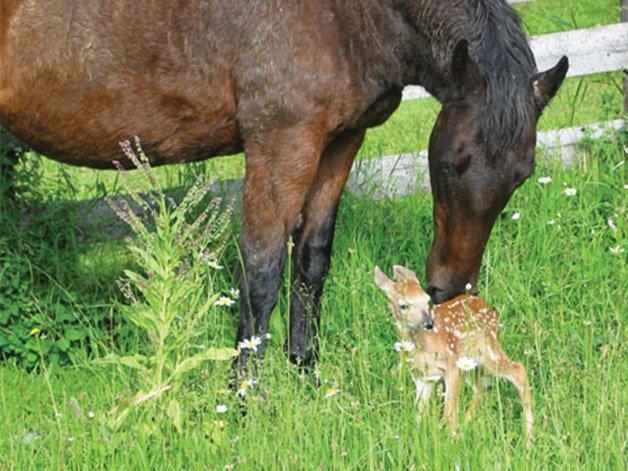 Animal-Friendships-07-MareFawn-sl