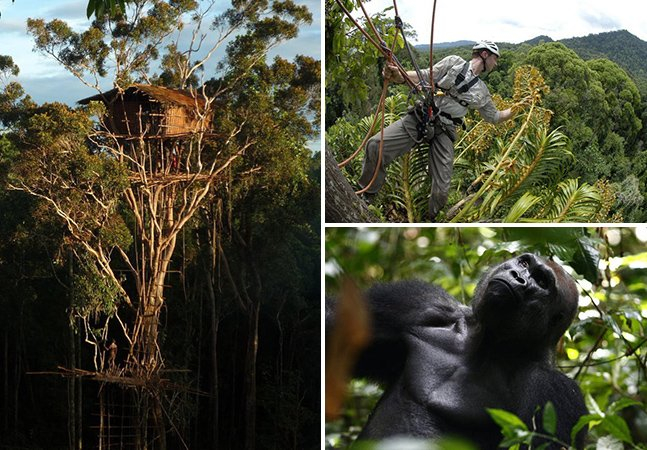 O cinegrafista especializado em vida selvagem que vive na floresta há mais de 15 anos