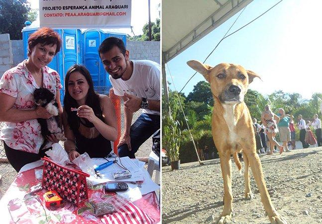 Cidade de Santa Catarina dá desconto no IPTU para quem adotar um animal de rua