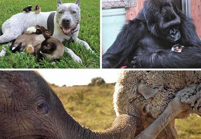 Livro registra as amizades inesperadas (e adoráveis!) do mundo animal