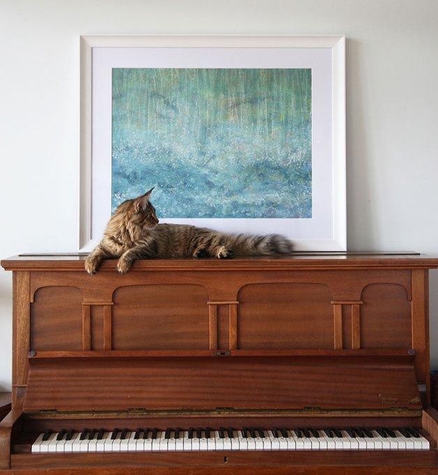 autista-gato1