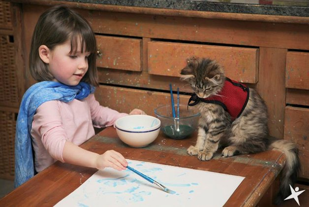 autista-gato15