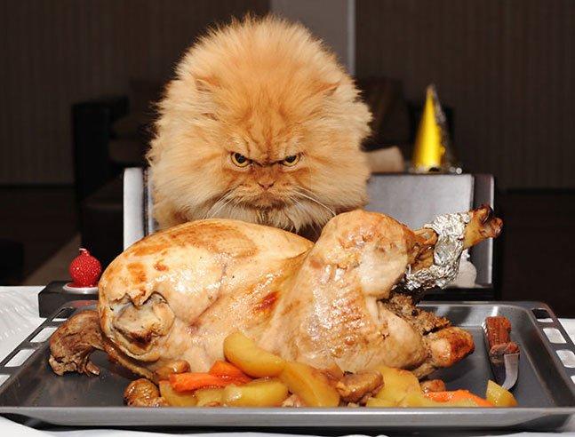 """Conheça o gato mais """"mal humorado"""" do mundo que conquistou a internet"""