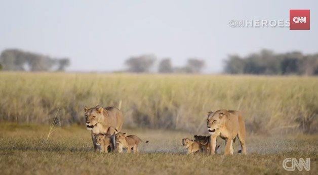 lionsguardians8