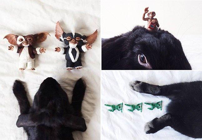 Dona coloca seu coelho em altas aventuras no Instagram