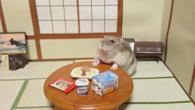 HamsterBartender10