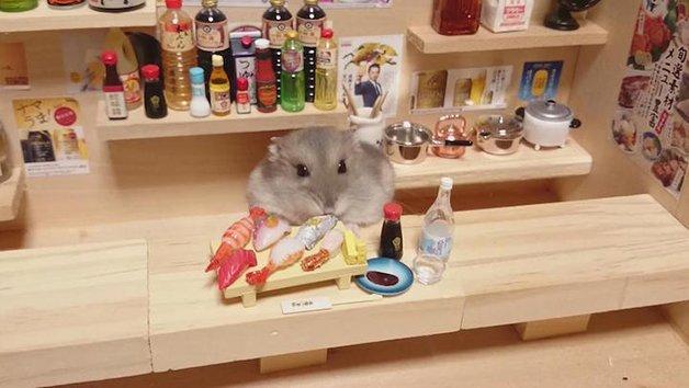 HamsterBartender12