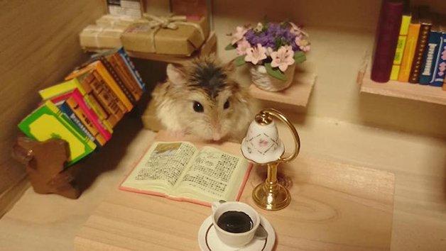 HamsterBartender13