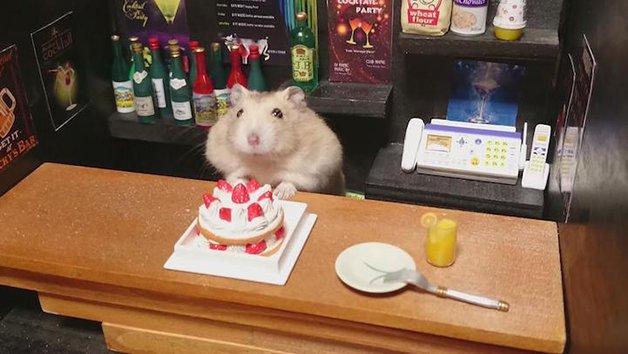 HamsterBartender7