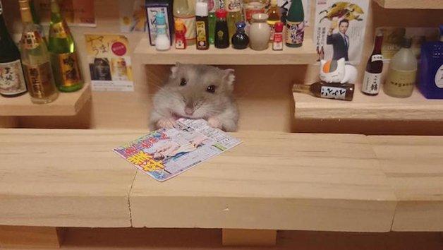 HamsterBartender8