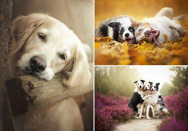 Fotógrafa de 19 anos cria série em que consegue deixar cães ainda mais apaixonantes