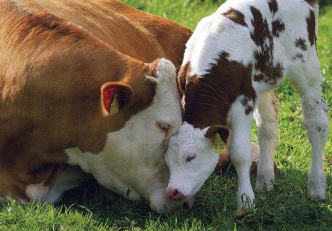 Lei que proíbe criação de animais em confinamento é encaminhada ao governo estadual