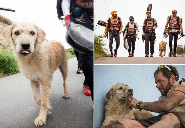 Cão vira-lata se une a esportistas em aventura e acaba sendo adotado