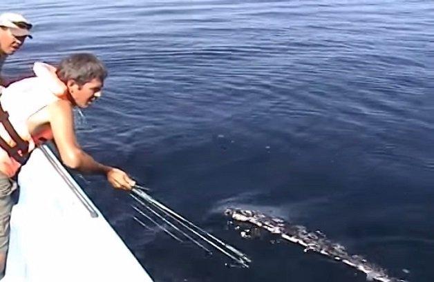 baleia4