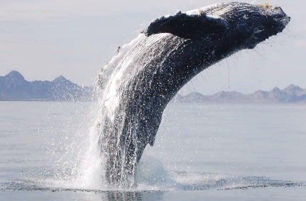baleia8