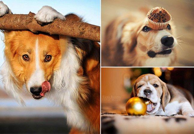 Fotógrafa de 20 anos capta em fotos os motivos pelos quais amamos os animais