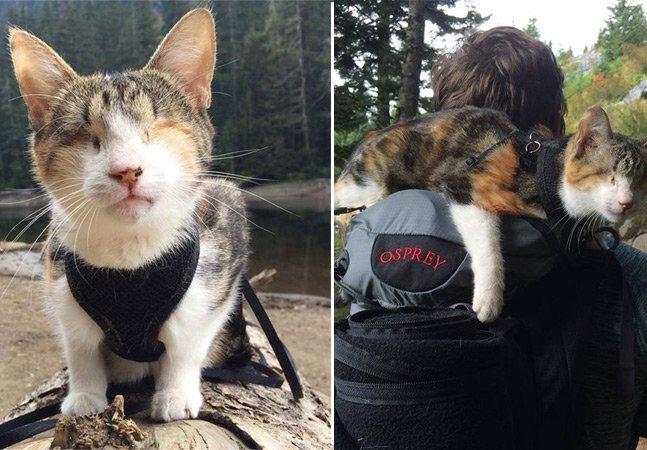 Gata cega resgatada de abrigo vira companheira de aventuras dos donos