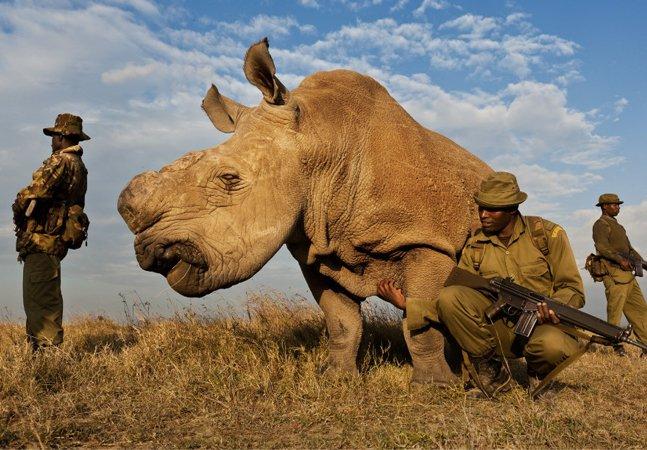 Quem são os homens que lutam para proteger os últimos seis  rinocerontes-brancos-do-norte do planeta