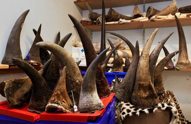 rinoceronte-africa10